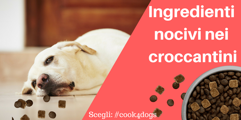 ingredienti nocivi nei croccantini