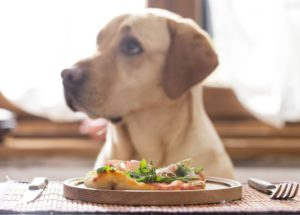 ingredienti per dog chef